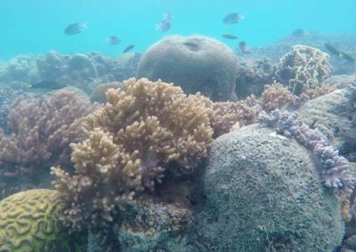 Coral-Under-water-at-the-Whitsunday-islands