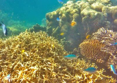 coral-and-fish