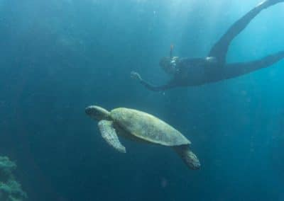 Snorkelling (1) (Medium)