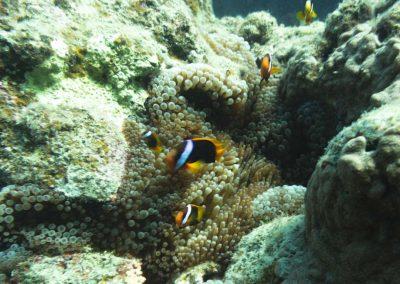Snorkelling (2) (Medium)