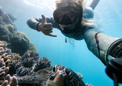Snorkelling Turtle (1) (Medium)