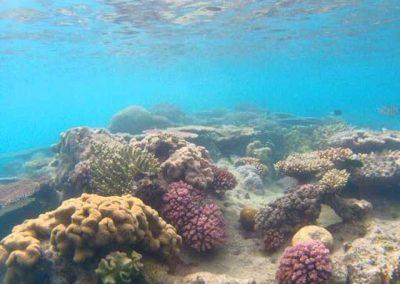 Coral-Whitsundays-snorkeling